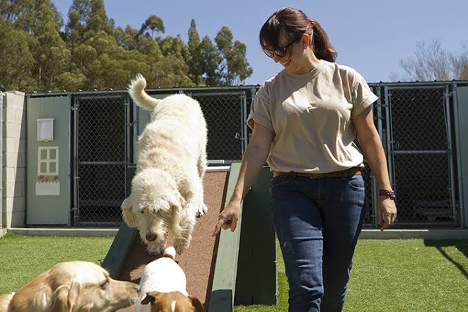 Provide extra good care to your Pet with Doggy day care Tempe az: